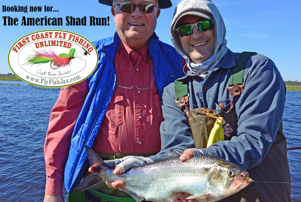 American Shad Fly Fishing  2016